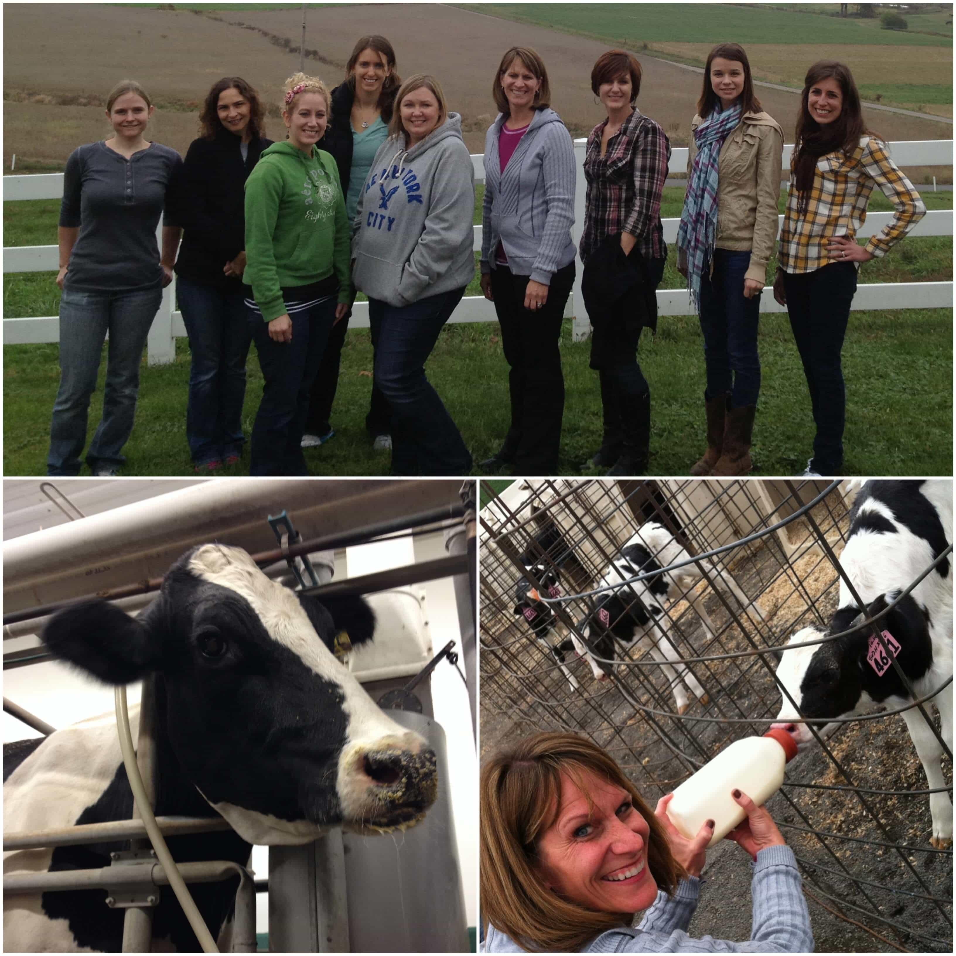 Extraordin-Dairy Adventure